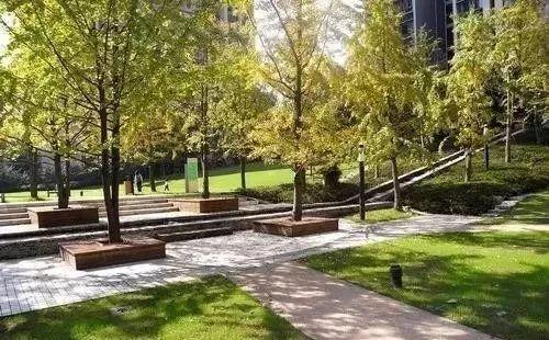 树阵景观的植物配置要点!_10