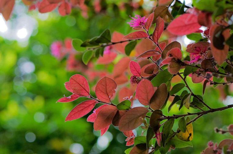 灵气之源·中式庭院主景树一览_31