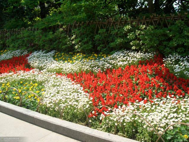 植物设计中花卉灌木植物色块的应用处理_2