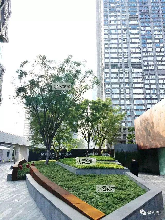 最详细图解:深圳湾三大豪宅景观植物配置!_23