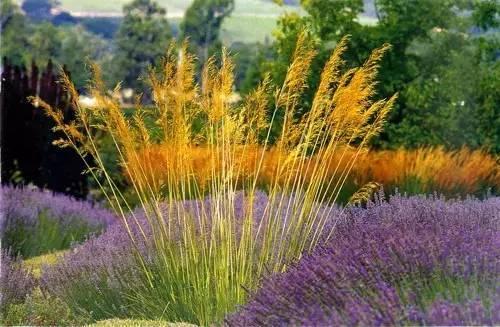 走近观赏草·植物造景