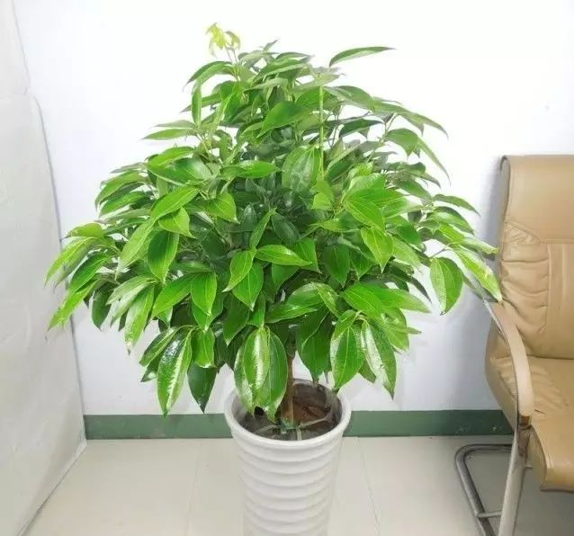 空气质量告急?这些扫霾植物排行榜中第一名竟然是......_43