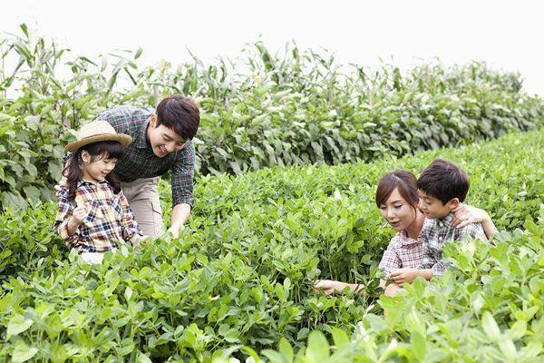 亲子农业|景观,经济,人文,三位一体?