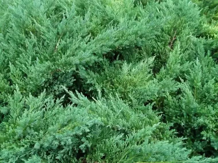 干货 景观地被植物的选择方式_6