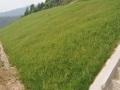 边坡绿化的几种施工工艺