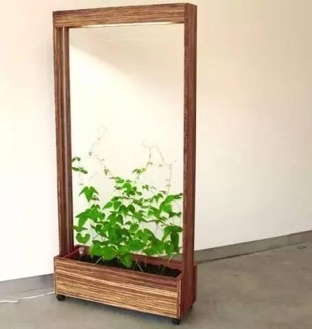 植物才是最美的隔断_4
