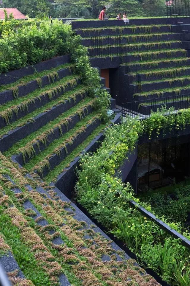在自己家的屋顶上建梯田,送城市一份乡村之乐!_5