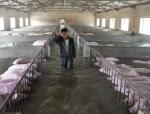 人猪情未了!6000多头生猪被困洪水中主人挥泪诀别