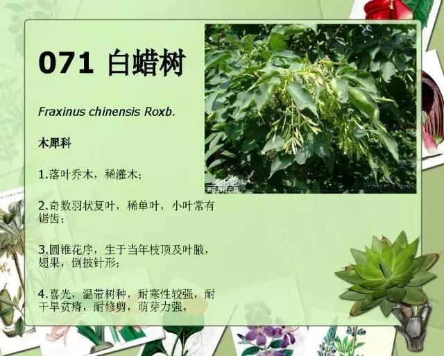 100种常见园林植物图鉴-20160523_183224_086.jpg