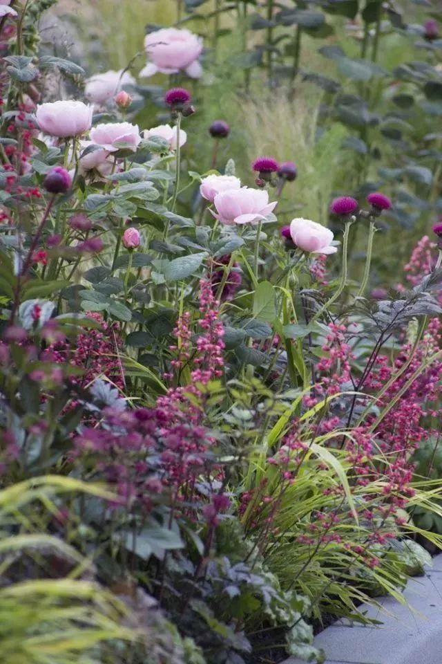 花园植物配色魔法学,你get到了吗?_3