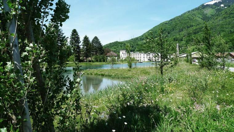 瑞士LowerFactoryPond水系环境修复-5