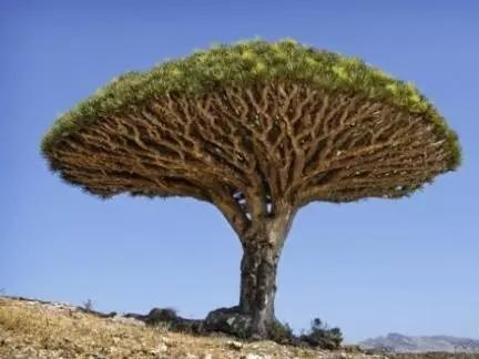 植物界的吉尼斯世界纪录大全-640.webp (12).jpg