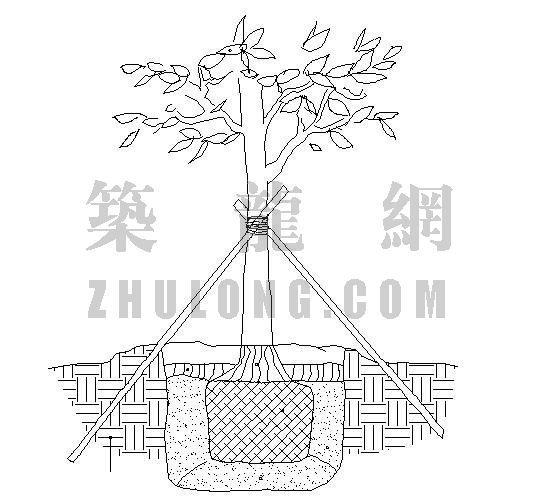 乔木栽植支架标准详图