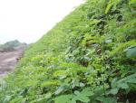 [重庆]高速公路绿化施工方案(27页)