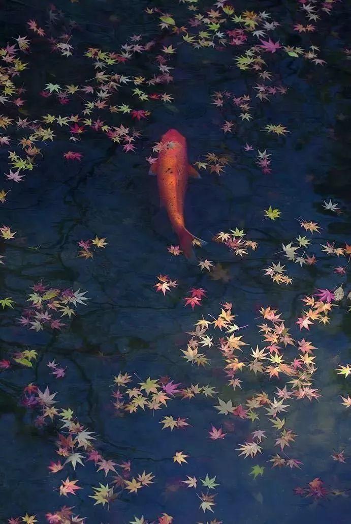 这才是中国人的院子,秋天美到骨子里_5