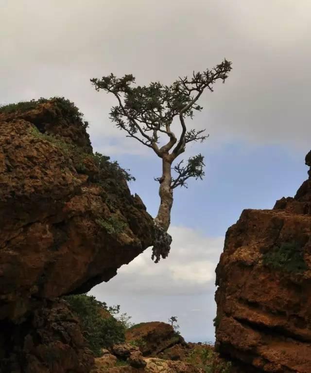 连树都这么拼命,你还有什么理由不奋斗?_14