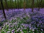 【地被】地被花卉特点及作用