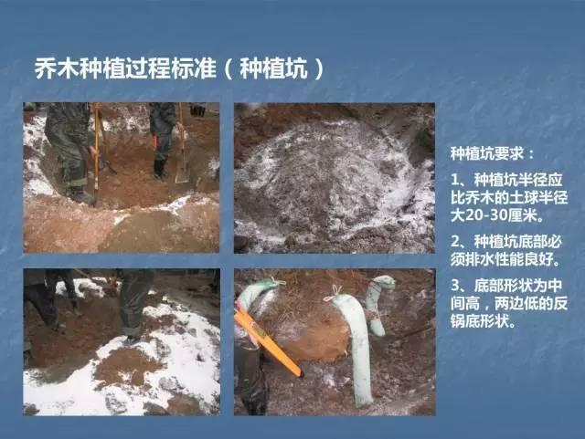 龙湖景观施工工艺标准效果(让你更懂现场)--软景篇_14