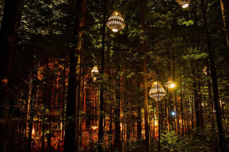 新西兰森林灯光装置