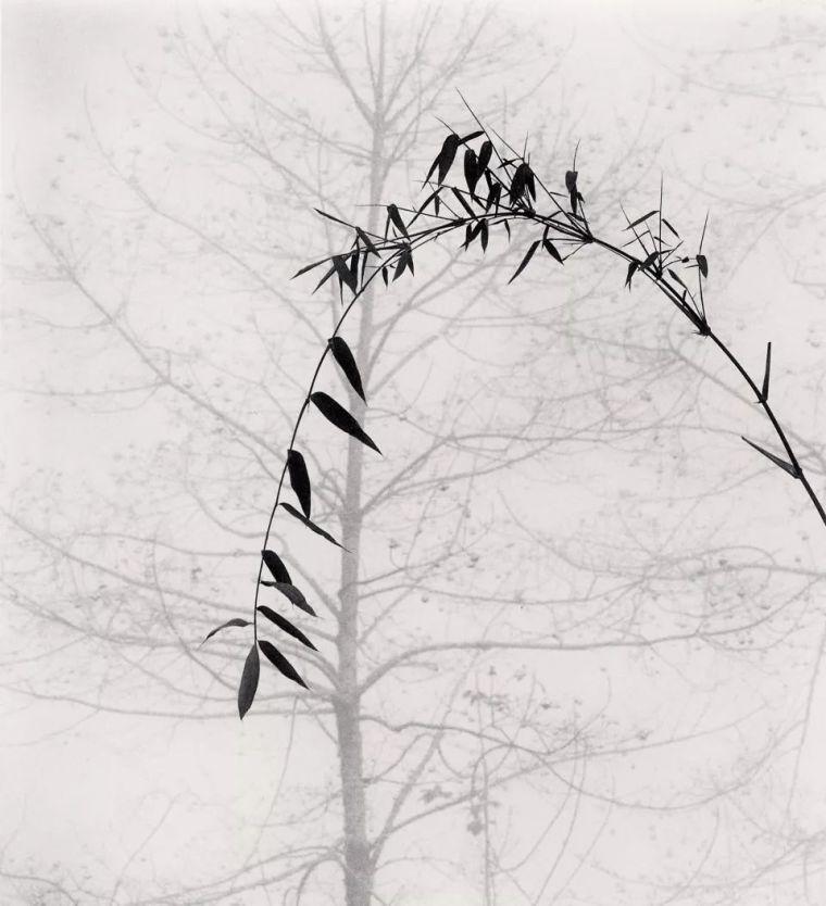 当房子遇上树,这群设计师要上天_15