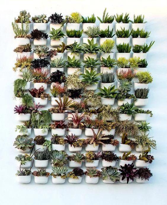 被挂起来的绿植,你家墙可以很美!