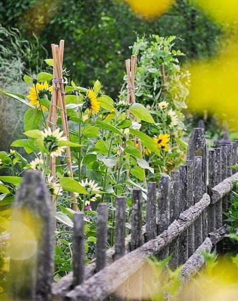 你真正需要的,也许只是一个小院,看繁花爬满篱笆_2
