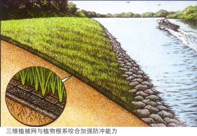 路基边坡防护-植物防护