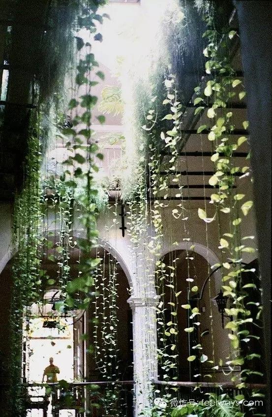 藤本植物[攀附的美丽]-640.webp (13).jpg