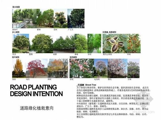 植物设计表
