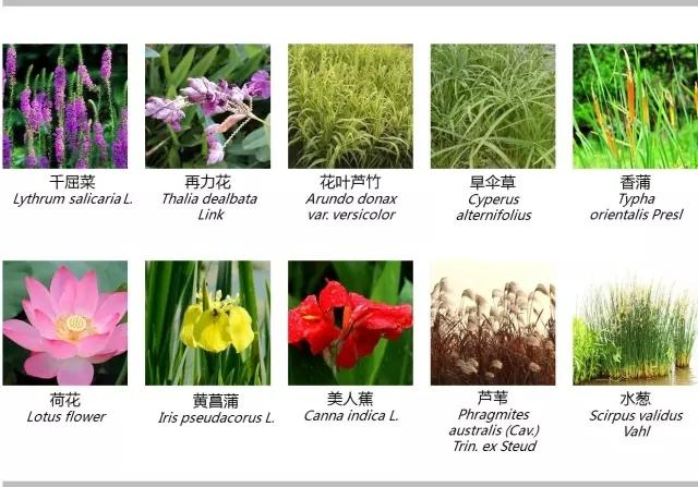 河道景观植物的选择与应用