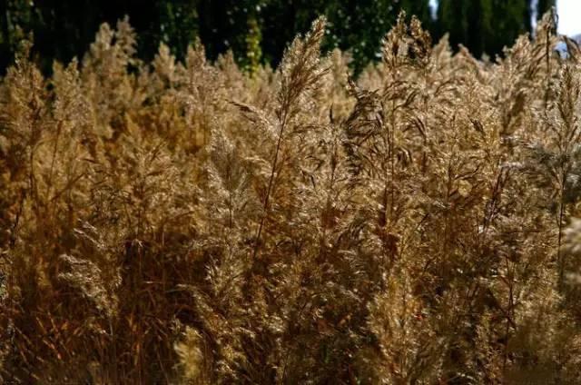 深秋的山草,美如画_2