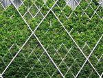 垂直绿化,让建筑活起来~