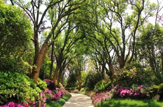必看 园林植物种植禁忌65例_1
