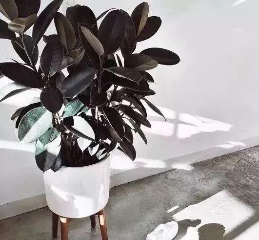 空气质量告急?这些扫霾植物排行榜中第一名竟然是......_34