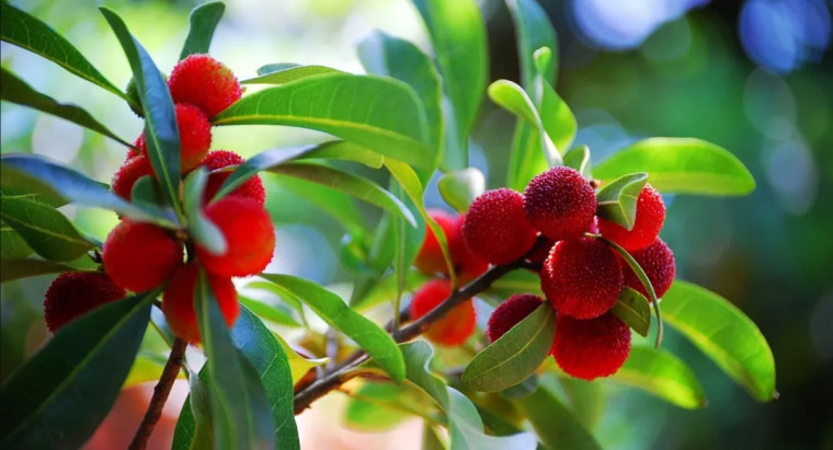 灵气之源·中式庭院主景树一览_34