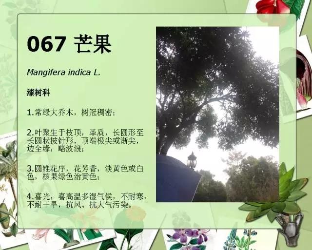 100种常见园林植物图鉴-20160523_183224_078.jpg