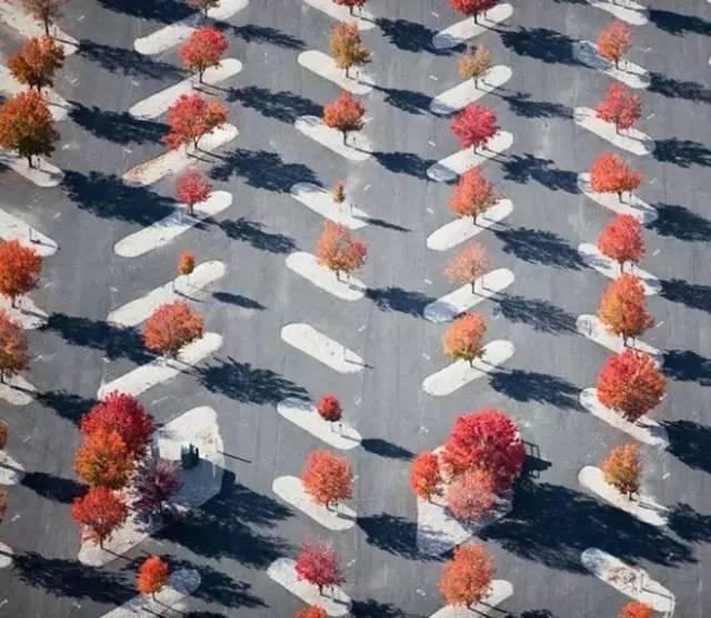 停车场也玩生态_11