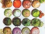 [图集]高清植物平面立面素材