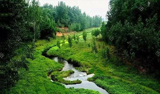 河道生态系统的恢复_2