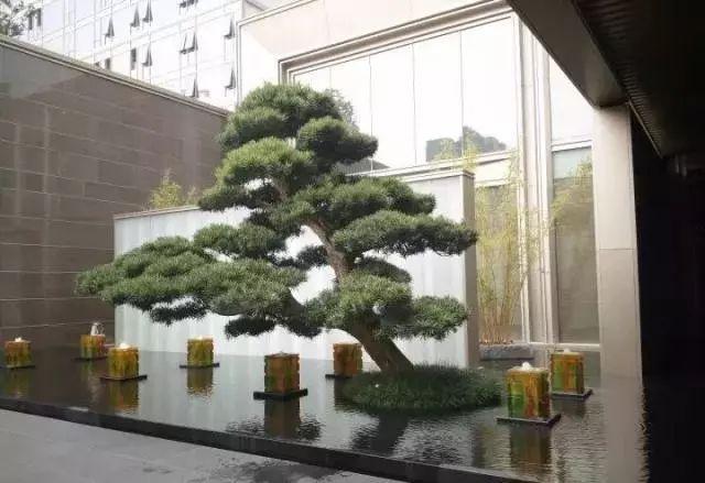 中式庭院常用主景树大全
