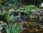 造,一个有水花园!