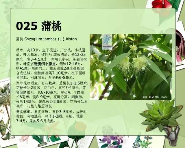 100种常见园林植物图鉴-20160523_183224_032.jpg