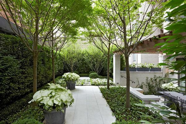 别墅庭院绿化有讲究,你做对了么?_5
