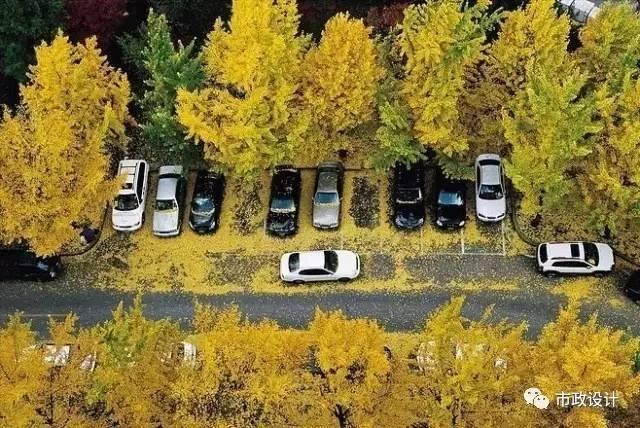 城市道路设计中的常用尺寸,你一定用得上!_6