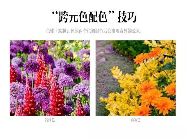 干货|庭院花园中的色彩搭配_18