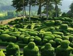 极富浪漫风情的法国Marqueyssac花园