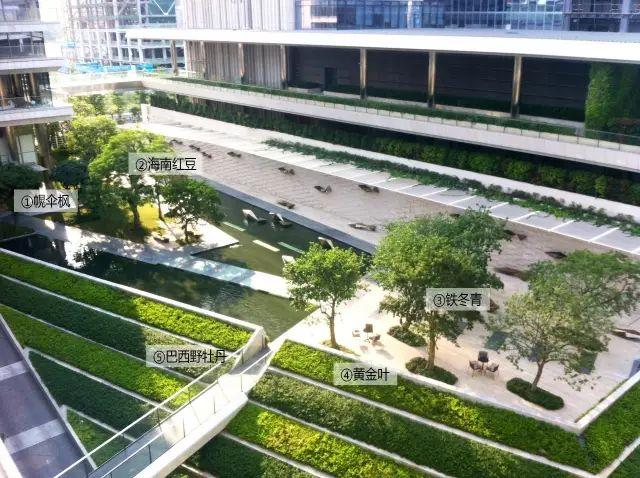 最详细图解:深圳湾三大豪宅景观植物配置!_21