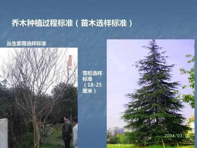 龙湖景观施工工艺标准效果(让你更懂现场)--软景篇_9