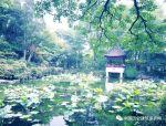 青浦—老城厢的慢时光