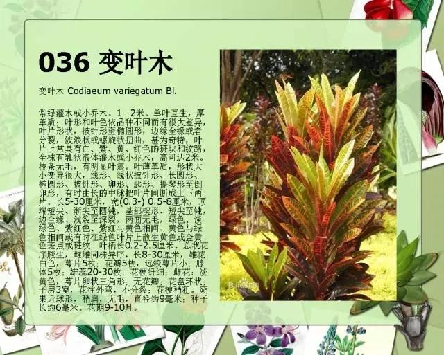 100种常见园林植物图鉴-20160523_183224_039.jpg